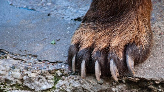Capital Markets Bear Paws